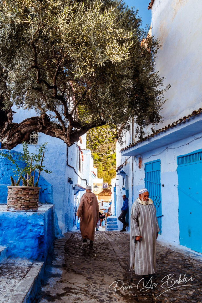 Under the olive tree in Chefchaouen