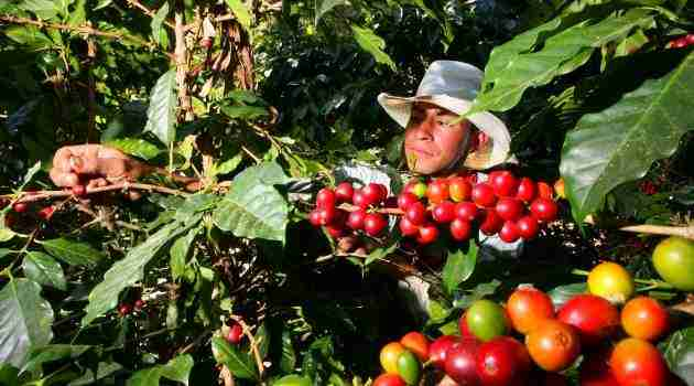 agricultor-producto