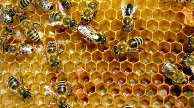 derivados de las abejas