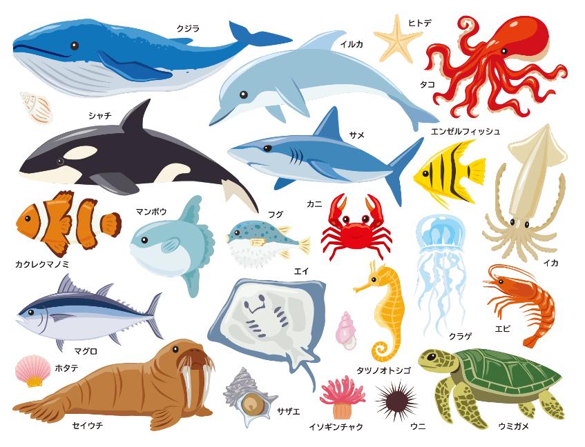 海の生き物リアルなイラストセット( 鯨、イルカ、シャチ、クマノミ、サメ、タコ、イカ、エンゼルフィッシュ、マグロ、マンボウ、カニ、フグ、タツノオトシゴ、クラゲ、海老、ホタテ、セイウチ、エイ、ウミガメ、サザエ、ウニ、ヒトデ、イソギンチャク)