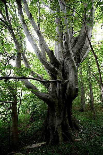 Der Zehnfinger-Baum