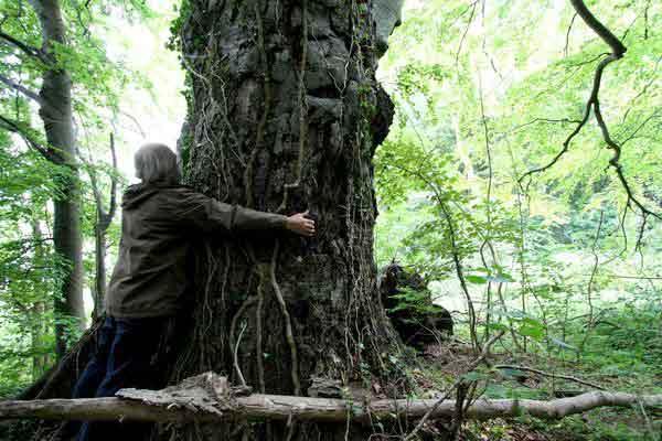 Der Umfang der Bäume wird auf Brusthöhe gemessen.
