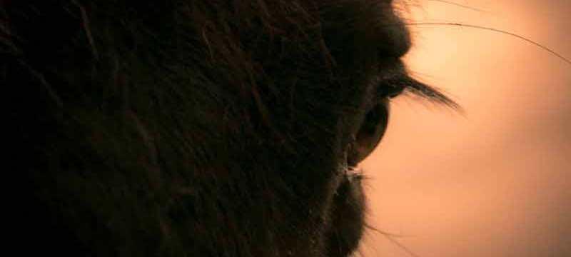 Kitschig schön: Pferdeauge im abendlichen Gegenlicht.