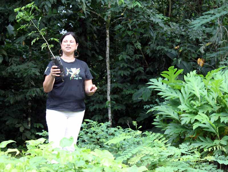 Biologin Xinia Vargas in der Baumschule des Ecocentro Danaus im Arenal-Nationalpark.