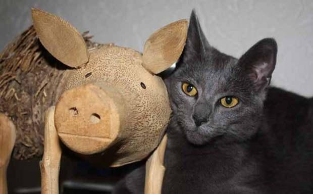 Haustier leben gekuschelt an Haustier tot (l.): Katze Elli