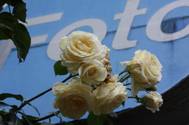 7. Oktober: Das Motto dieser Seite: Blumenfotos.