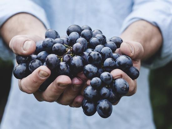las uvas encontrado la sustancia, la cual salva de cáncer