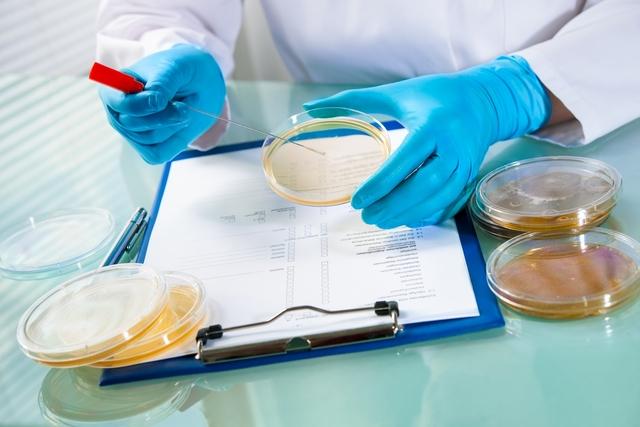 Cómo identificar la infección por Candida auris y cómo tratar