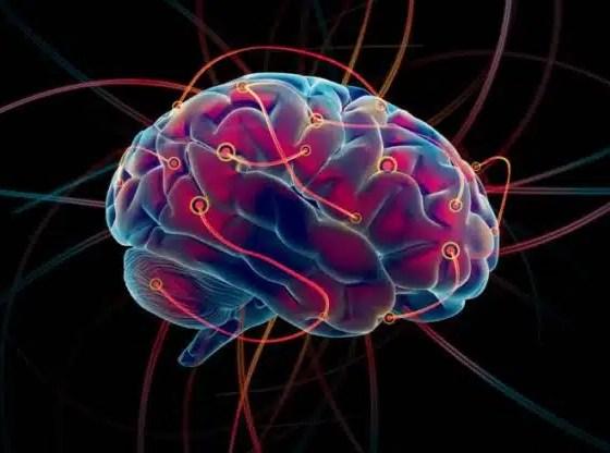 conectoma cerebro