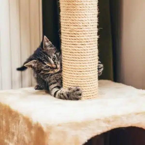 rascadores verticales de gatos