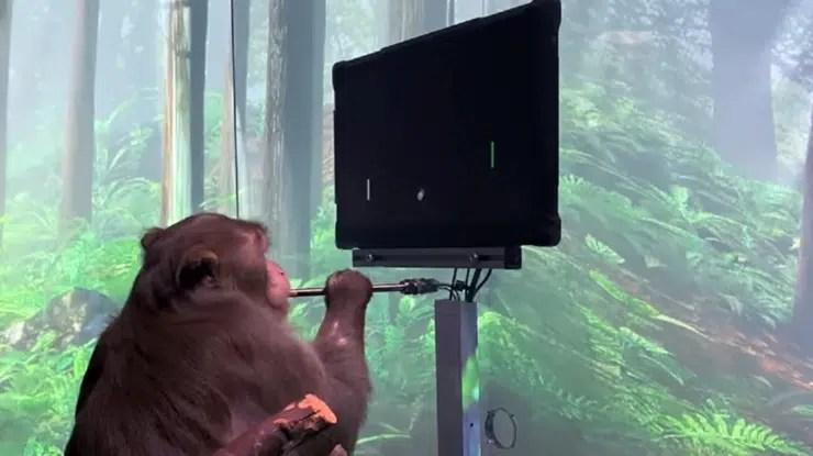 implantes cerebrales de Elon Musk le enseña al mono a jugar Pong con su mente