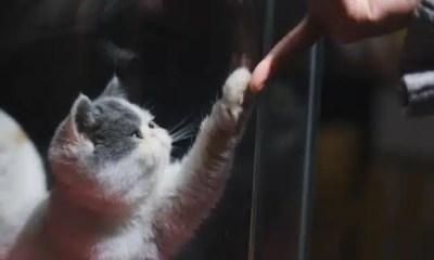 covid-19 gatos