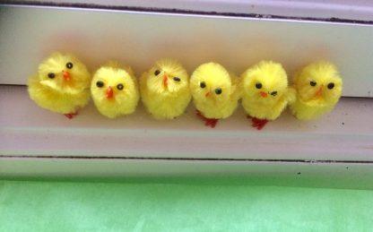Halva kycklingpaketet uppställda på en rad