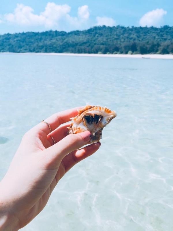 Bắt mấy chú sao biển, sò biển đi lạc vào bờ cát (ảnh: Internet)