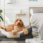 17 Best Dog Beds 2020 The Strategist New York Magazine