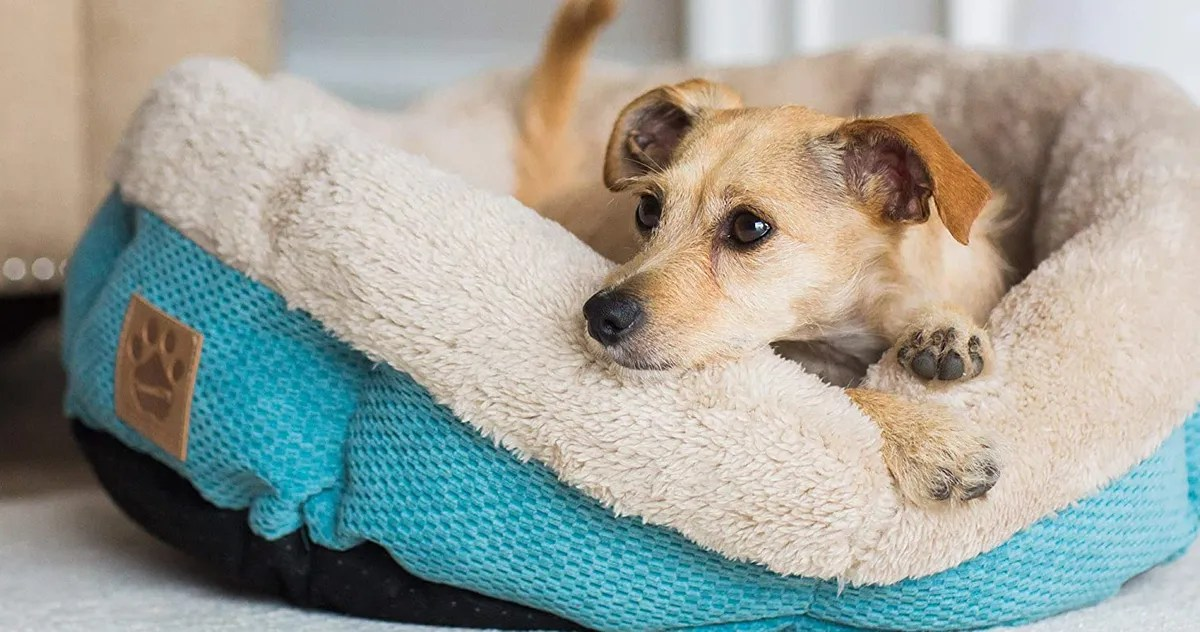 the best dog beds on amazon according to hyperenthusiastic reviewers