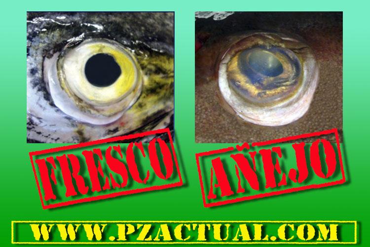 Consejo en la compra de pescado pzactual.com