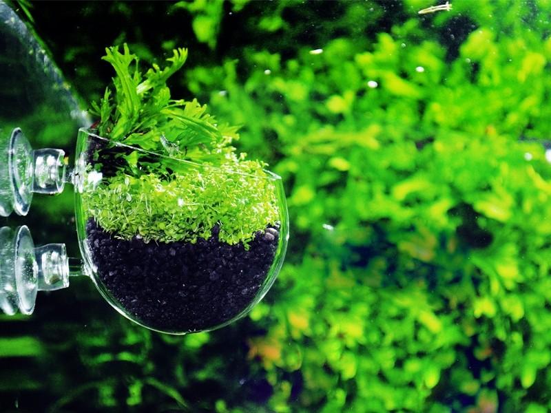 Q-Grow Pflanzschale Aquarium 1
