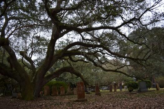 Quelques tombes à l'ombre d'un chêne