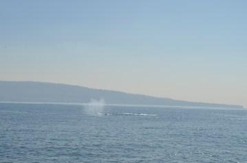 Un souffle de baleine !