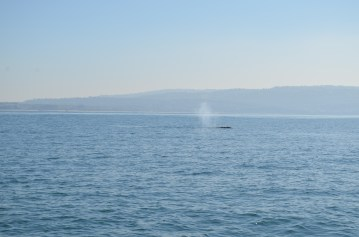 whale-watching-52
