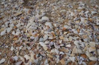 Des coquillages comme à la mer du Nord <3