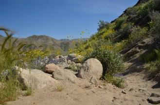 Murray Canyon (10)