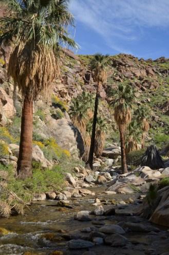 Murray Canyon (34)