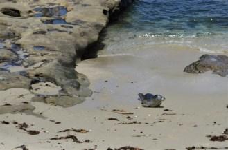 La Jolla Cove (7)