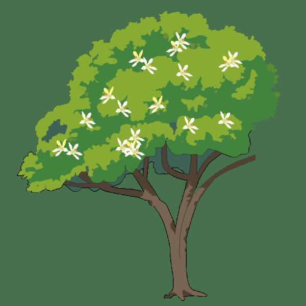 arbre fleurs