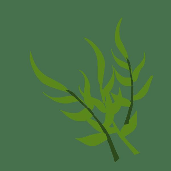 Plantes, images en png fond transparent - Tests & Jeux ...