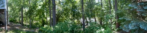backyardpanorama1