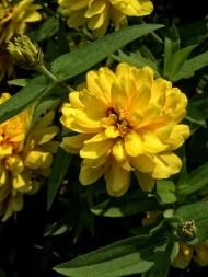 Garden Flowers-25
