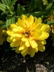 Garden Flowers-26
