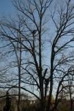 oaks_0001