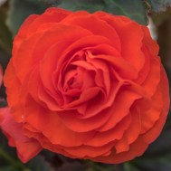 Flowers BackYard-3