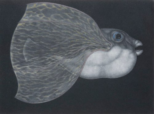 Graeme Peebles pufferfish 6