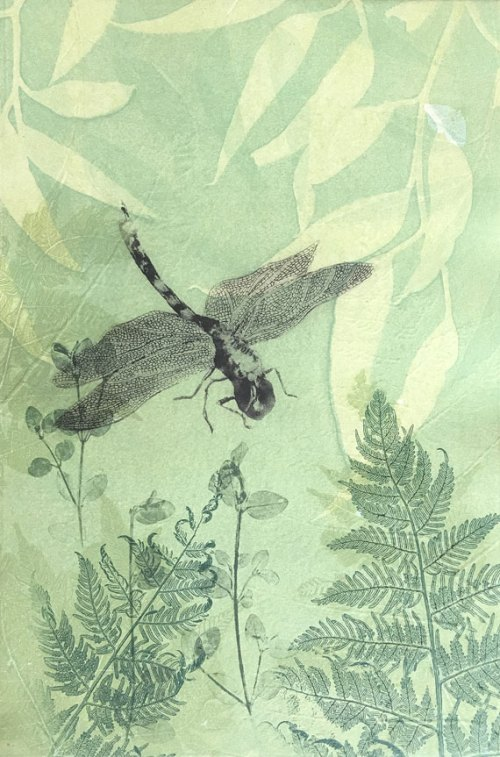 Trudy-Rice-Dragonfly-Eucalyptus-Gum-and-Ferns
