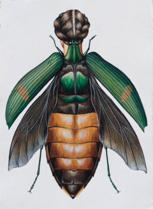 Deborah Klein Catoxantha opulenta Beetle Woman, 2014, watercolour, 41.91 x 29.72 cm
