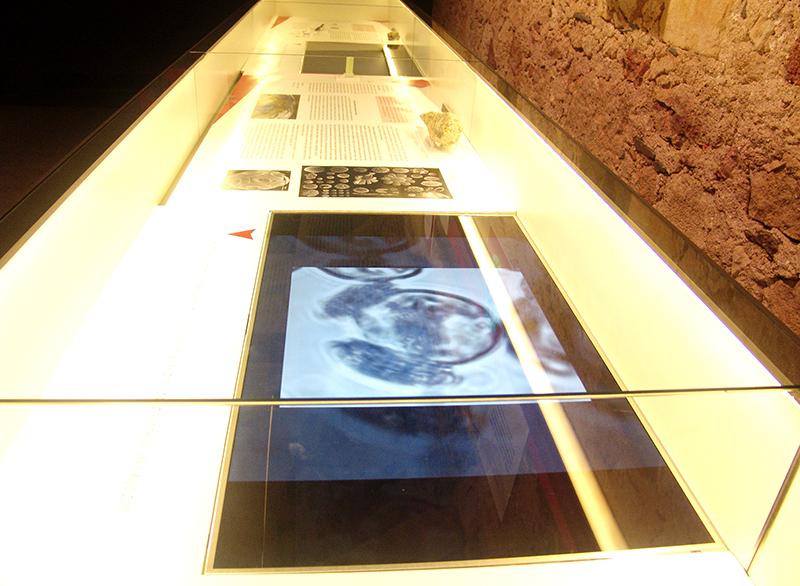 Diseño Expositivo Cristalografía