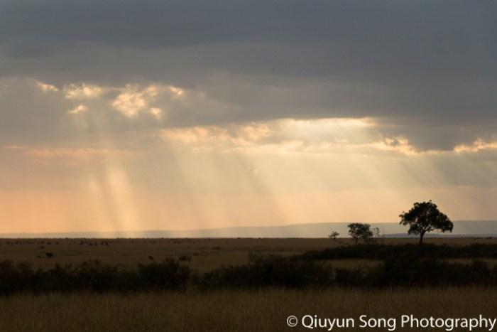 Kenya Maasai Mara-6809