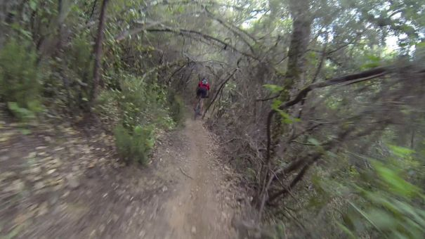 corriol single track bosc mtb bici btt