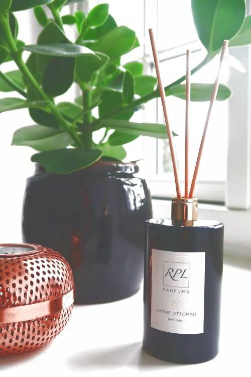 clusia-plante