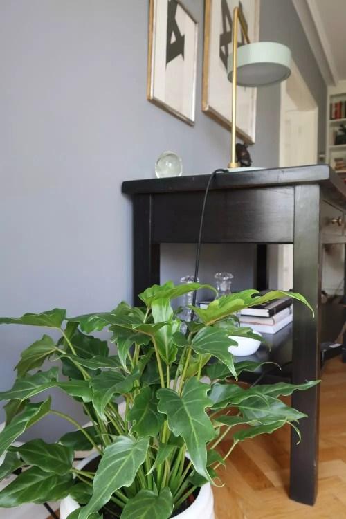planter-boligen