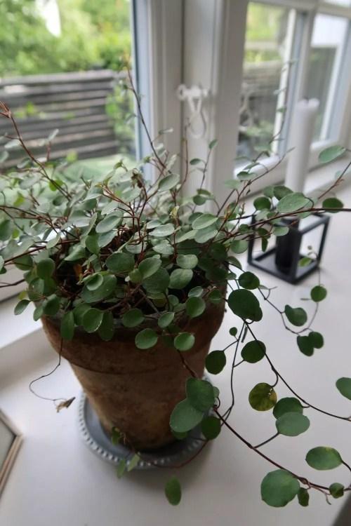 pletter-i-luften-plante