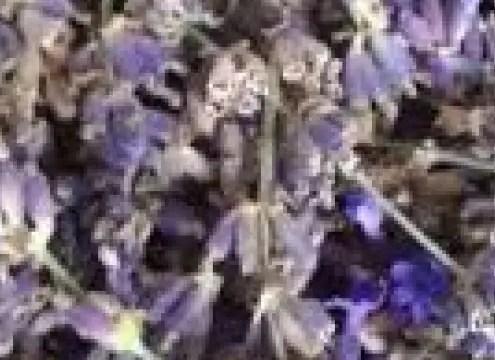 Få glæde af dine afblomstrede lavendler