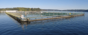 Ban Atlantic Salmon Farms | Quinault Division of Natural Resources