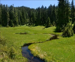 Freshwater Resources | Quinault Division of Natural Resources