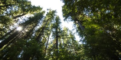 Forest Health   Quinault Division of Natural Resources