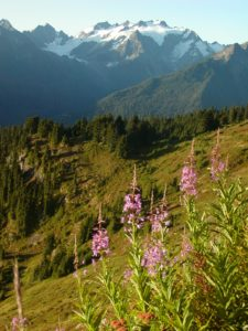 Quinault Plant Protection Program | Quinault Environmental Protection Department